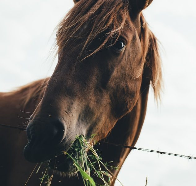 Häst juridik